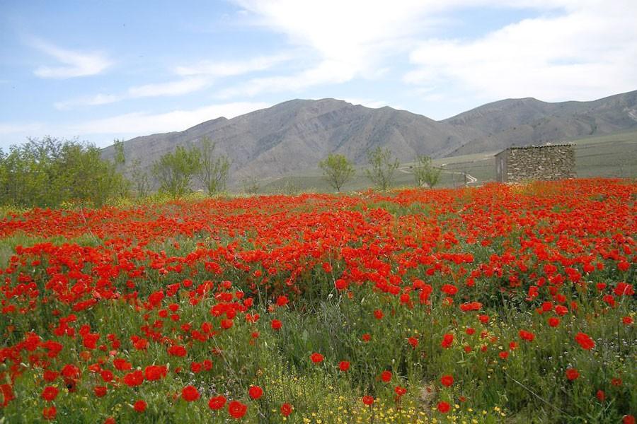 туркменистан природа