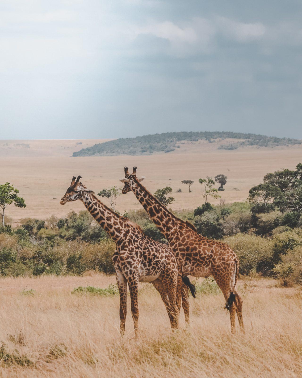 виза в кению для граждан рф