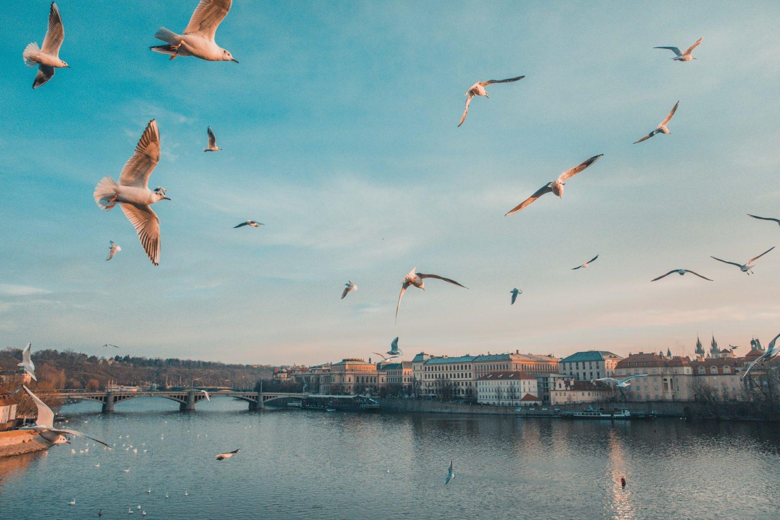 Медицинская страховка для визы в Чехию: нужна ли?